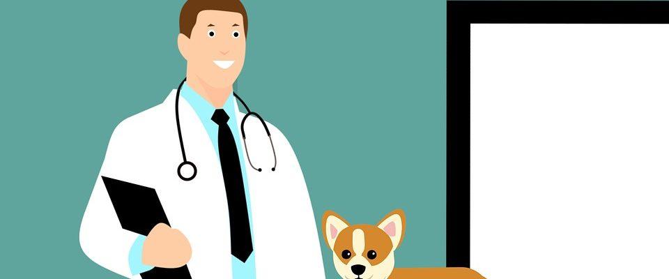 Les vétérinaires
